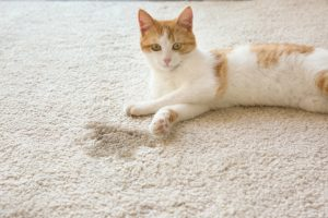Cute cat lying on carpet near wet spot